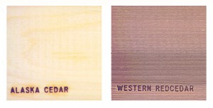 Alaskan Yellow Cedar versus Western Red Cedar